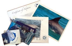 Dolphin Adoption Pack