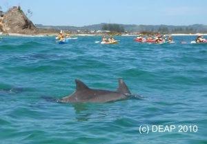 Bottlenose Dolphins & Kayaks, Byron Bay