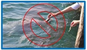 dont feed dolphins graphic 1
