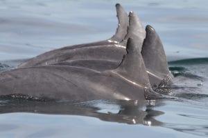 Dolphin Ecology Workshop Byron Bay