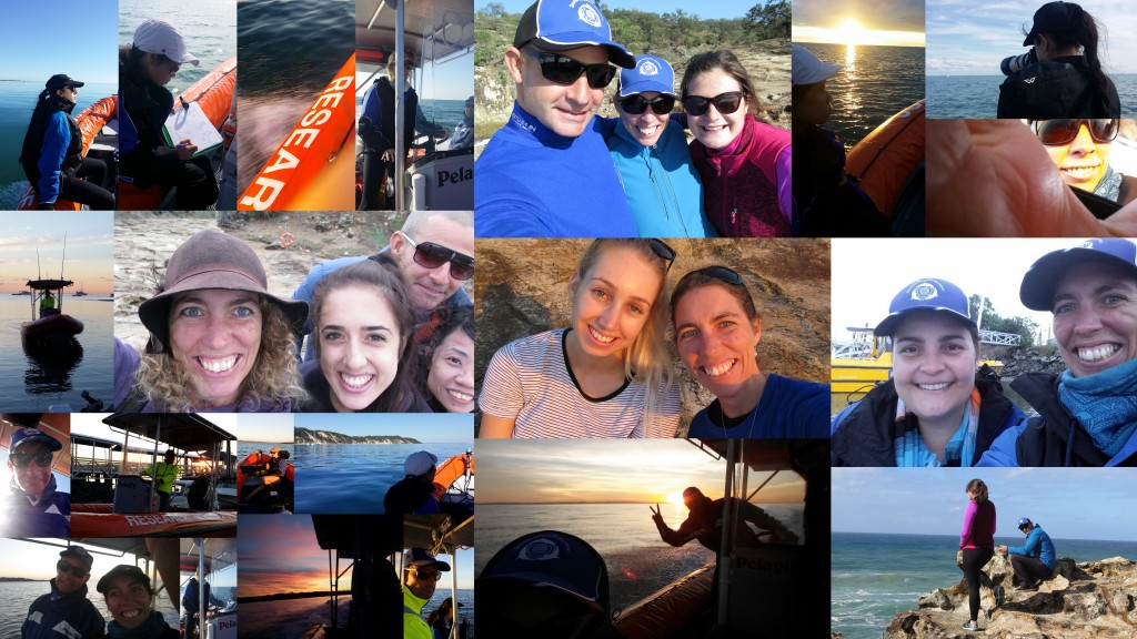 There's so many memorable moments during our Moreton Bay Ecovolunteer Expeditions