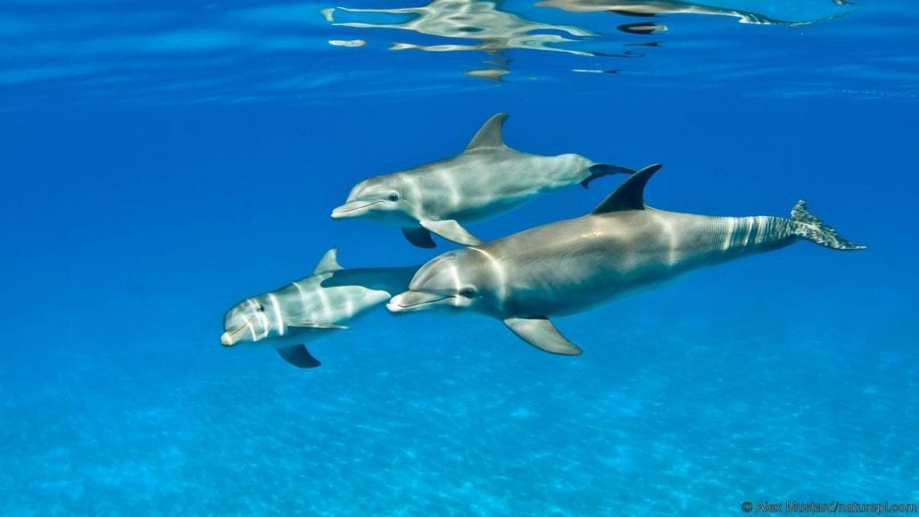find out more - Dolphin Pics