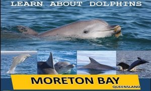 Moreton Bay Dolphin Ecology Workshop poster 2017 LRbanner 2